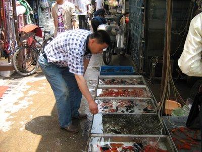 05.07.06-FlowerMarketFish[1]-778545